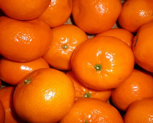 Trgatev mandarin v dolini Neretve